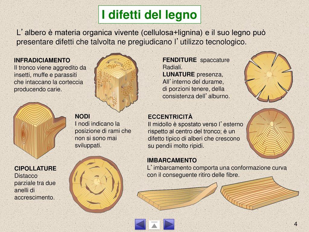 Le Fibre Del Legno il legno il legno è stato il primo materiale utilizzato