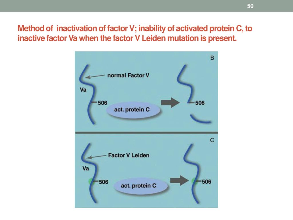 Method of inactivation of factor V; inability of activated protein C, to inactive factor Va when the factor V Leiden mutation is present.