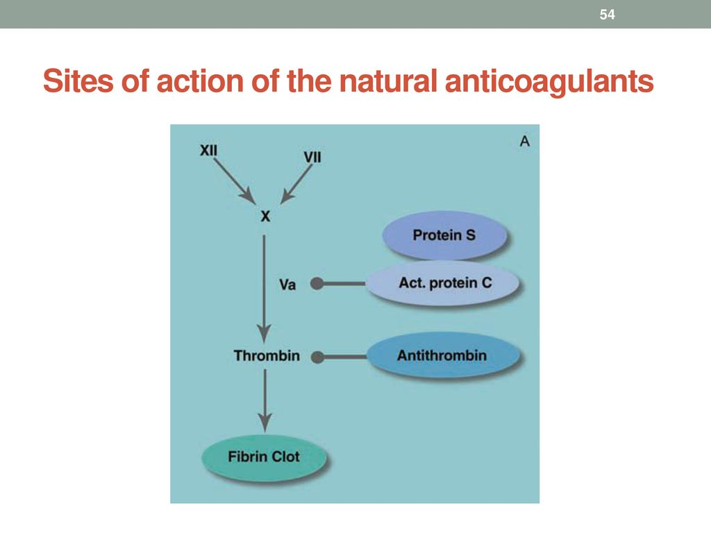 Sites of action of the natural anticoagulants