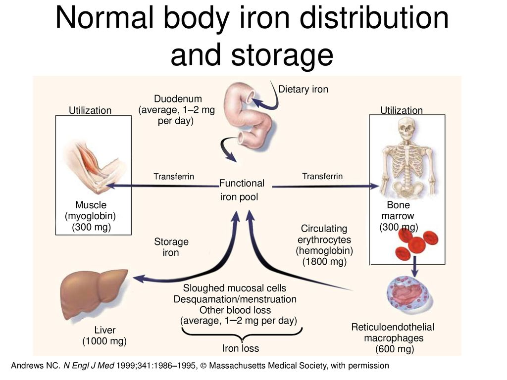 Normal body iron distribution and storage
