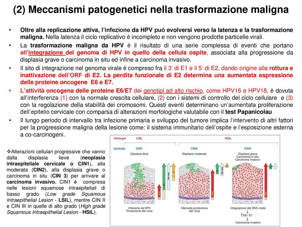 periodo latenza papilloma virus medicamente pentru tenă la oameni