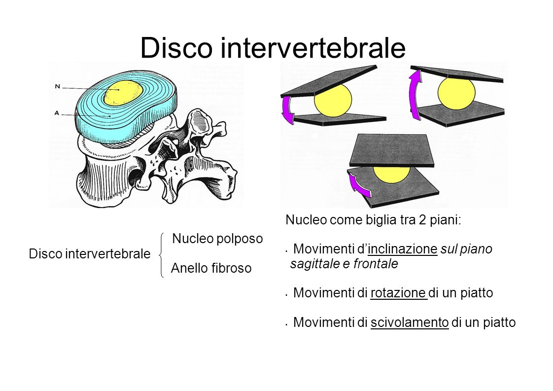 Disco intervertebrale