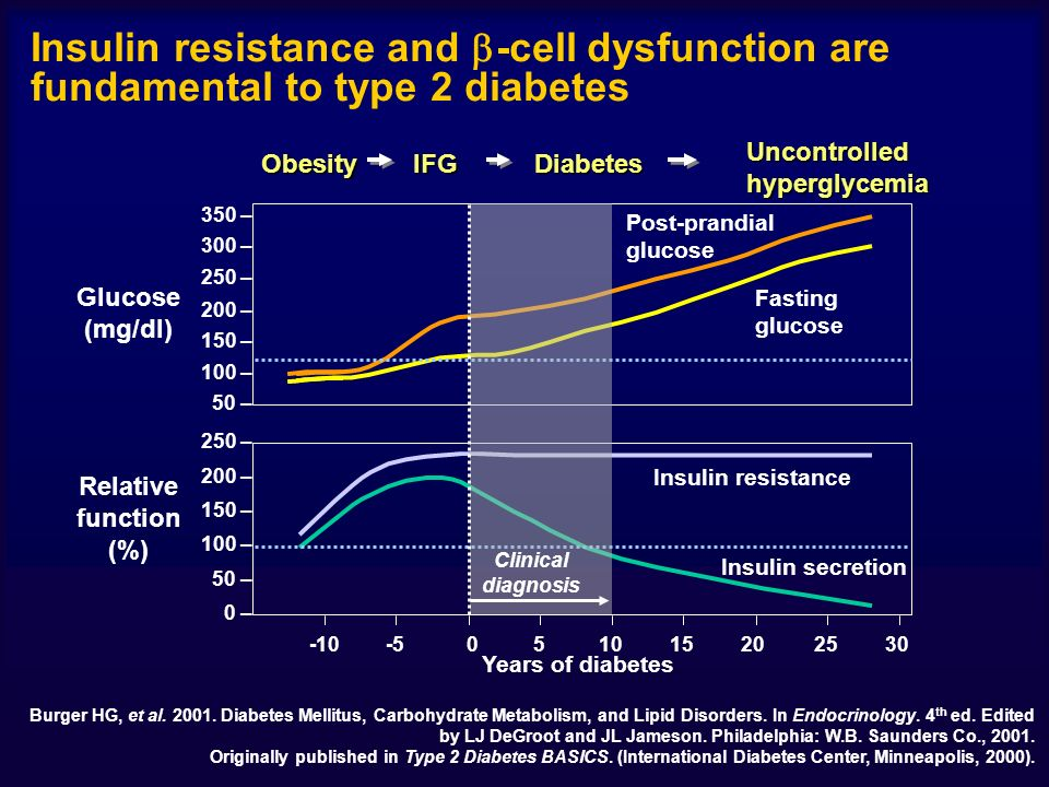 Insulin resistance and -cell dysfunction are fundamental to type 2 diabetes