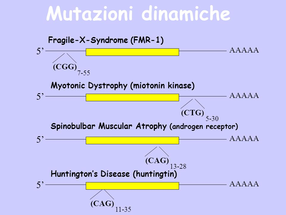 Mutazioni dinamiche 5' 5' 5' 5' Fragile-X-Syndrome (FMR-1) AAAAA (CGG)