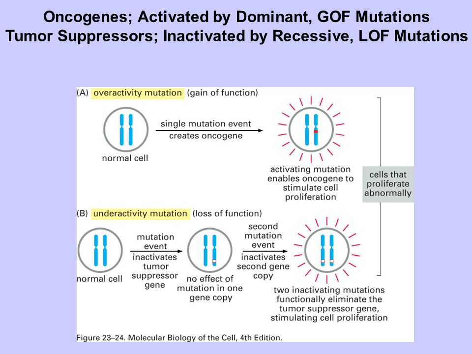 Oncogenes; Activated by Dominant, GOF Mutations
