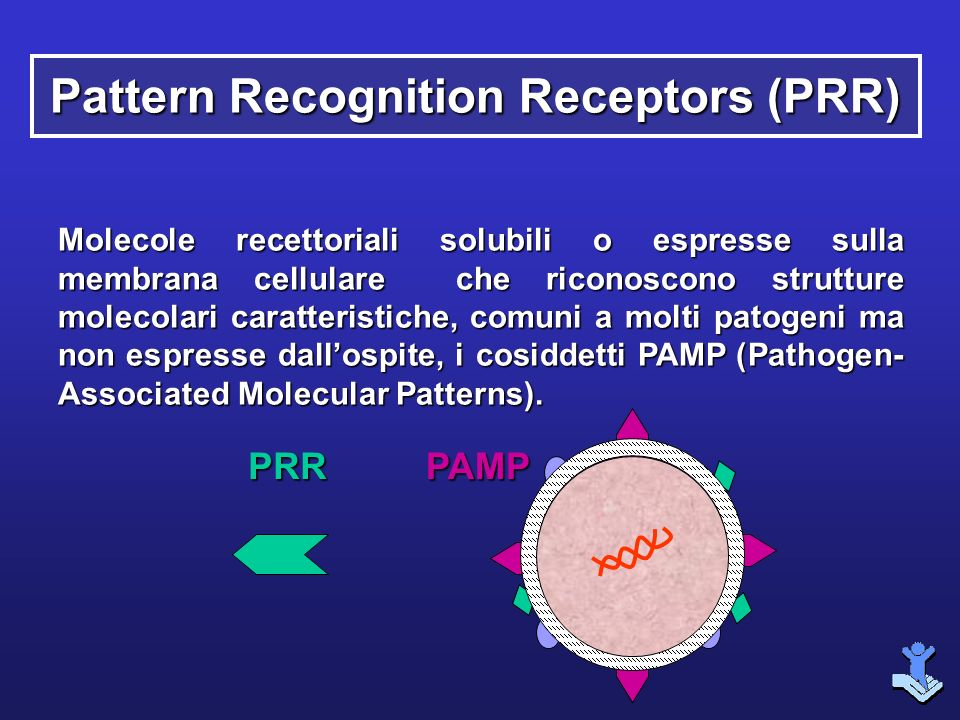 Pattern Recognition Receptors (PRR)