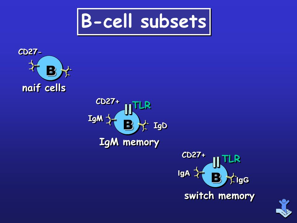 B-cell subsets B B B naif cells TLR IgM memory TLR switch memory CD27-