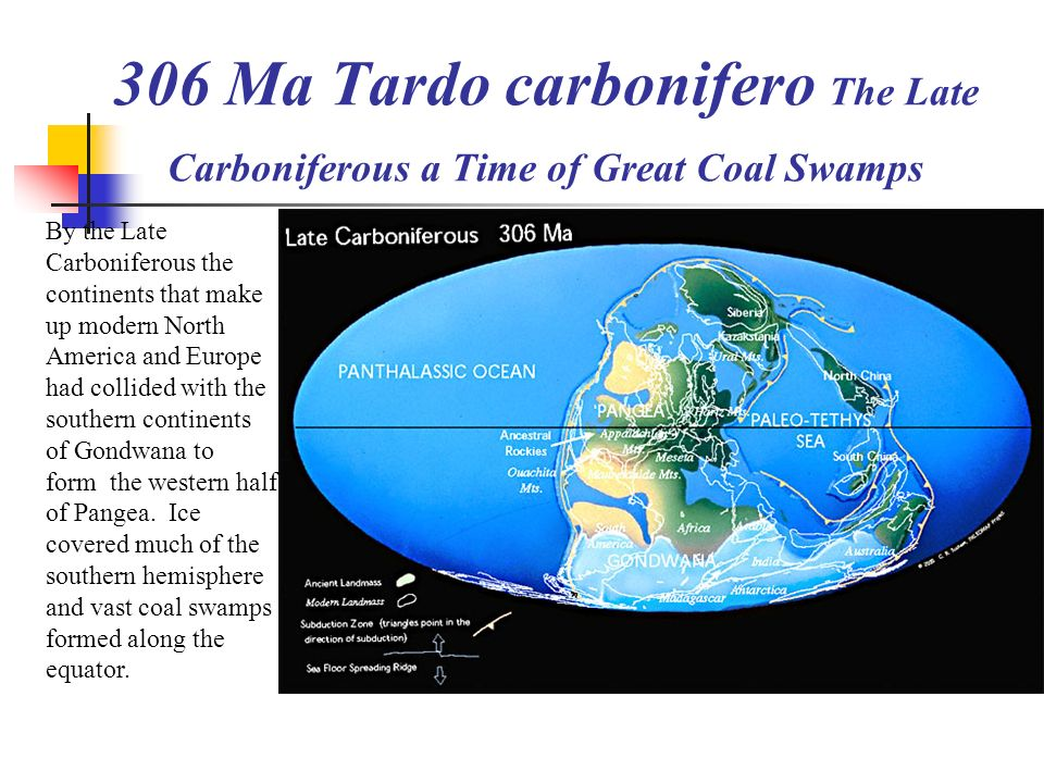 306 Ma Tardo carbonifero The Late Carboniferous a Time of Great Coal Swamps