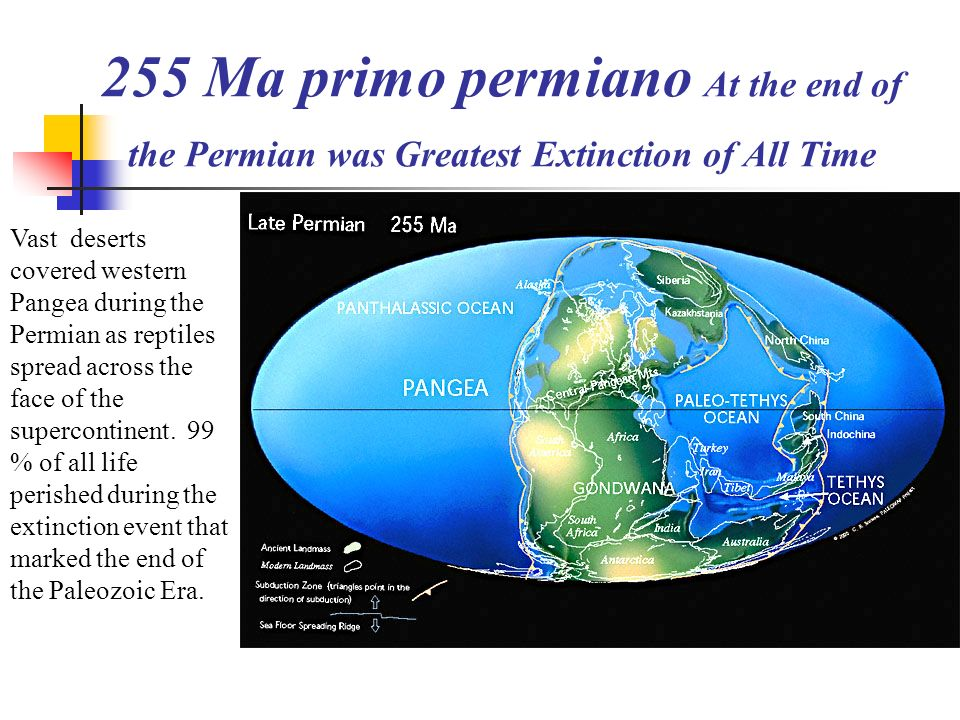 255 Ma primo permiano At the end of the Permian was Greatest Extinction of All Time