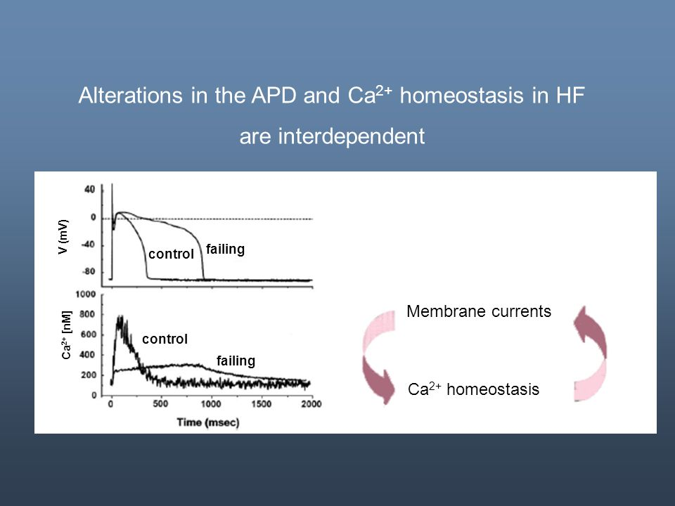 Alterations in the APD and Ca2+ homeostasis in HF