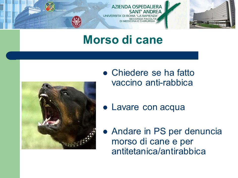 Morso di cane Chiedere se ha fatto vaccino anti-rabbica