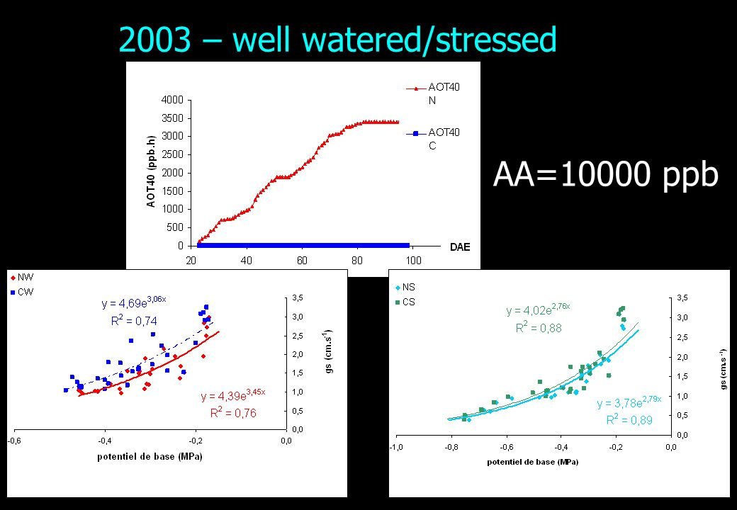 2003 – well watered/stressed