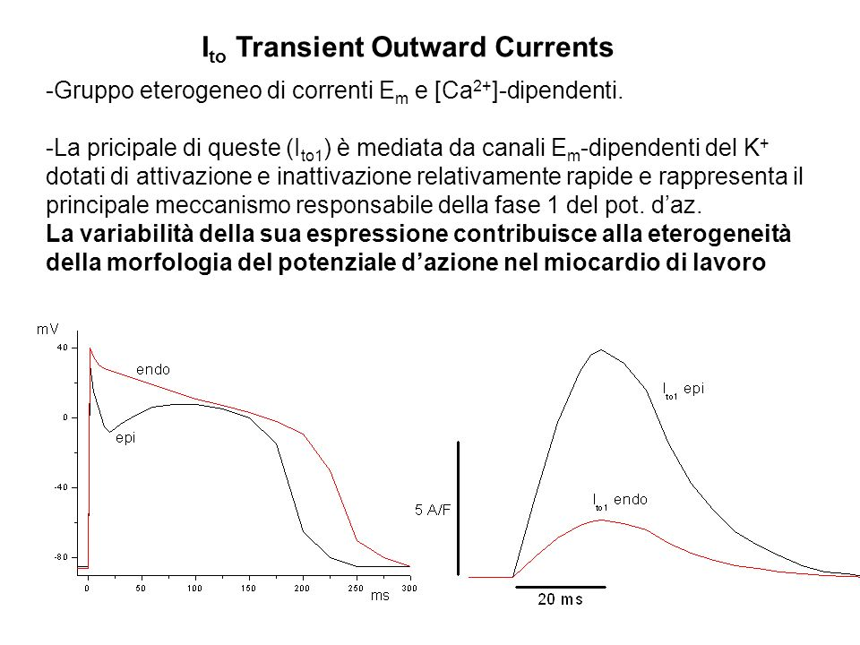 Ito Transient Outward Currents
