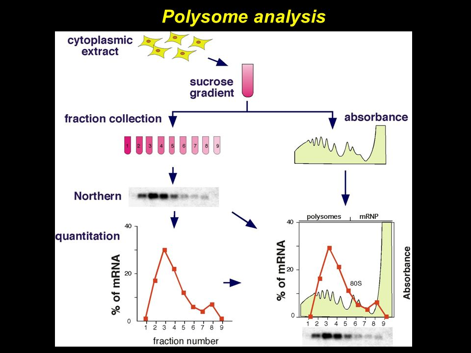 Polysome analysis
