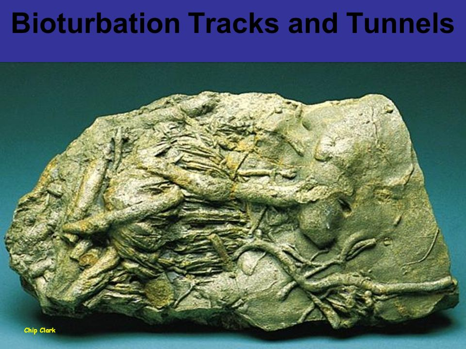 Bioturbation Tracks and Tunnels