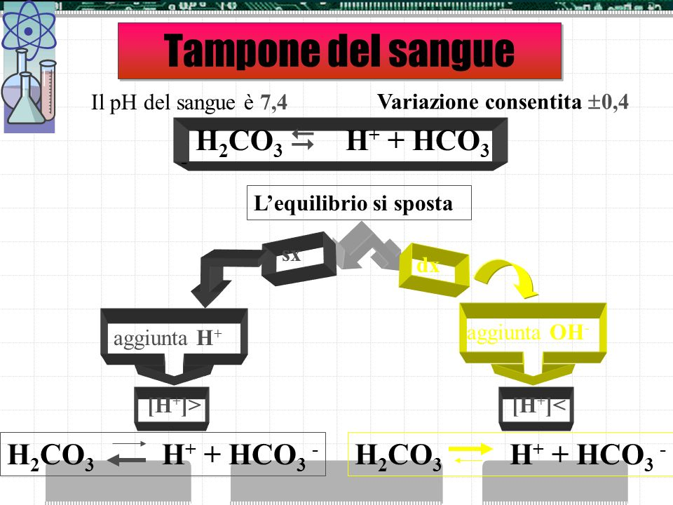 Tampone del sangue H2CO3  H+ + HCO3 - H2CO3 H+ + HCO3 -