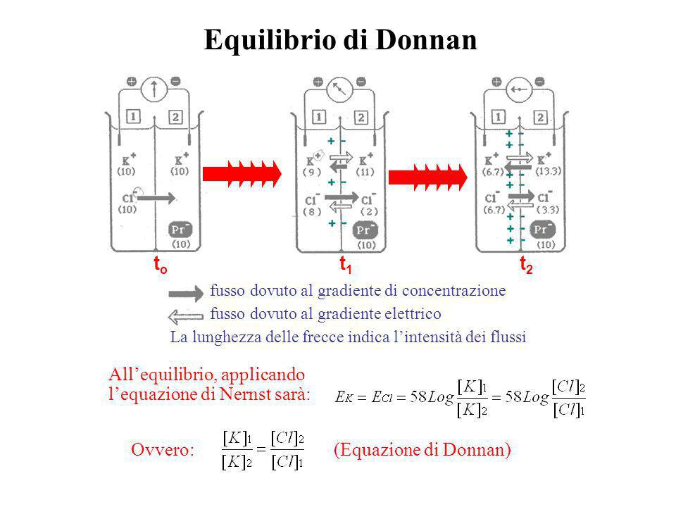 Equilibrio di Donnan to t1 t2 All'equilibrio, applicando