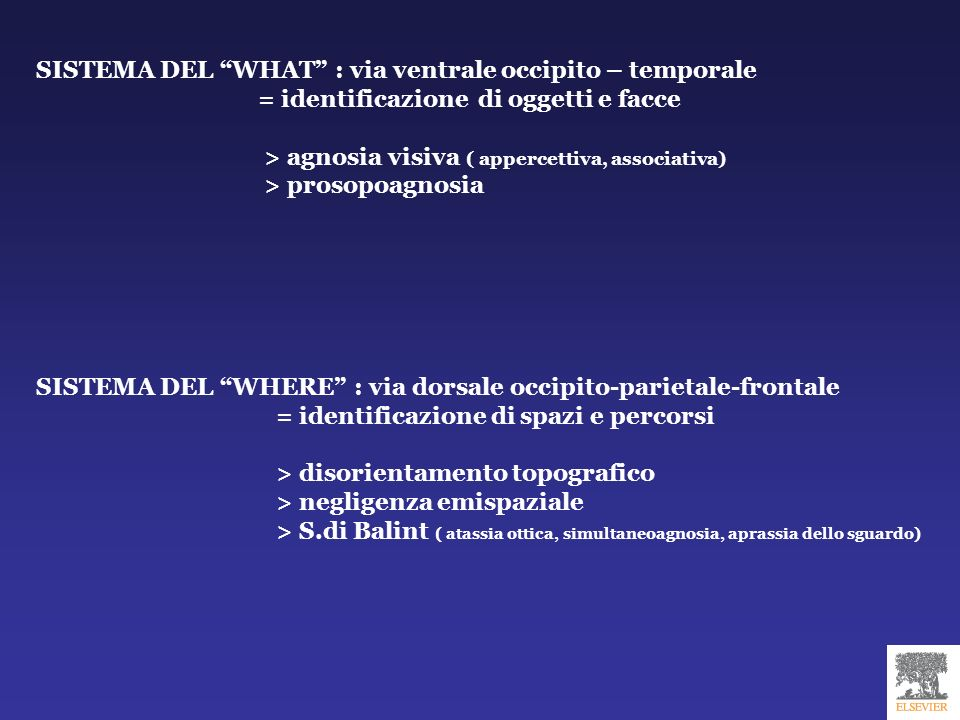 SISTEMA DEL WHAT : via ventrale occipito – temporale