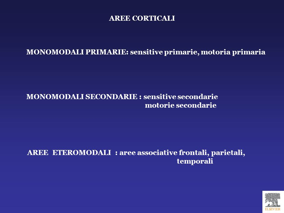 AREE CORTICALI MONOMODALI PRIMARIE: sensitive primarie, motoria primaria. MONOMODALI SECONDARIE : sensitive secondarie.