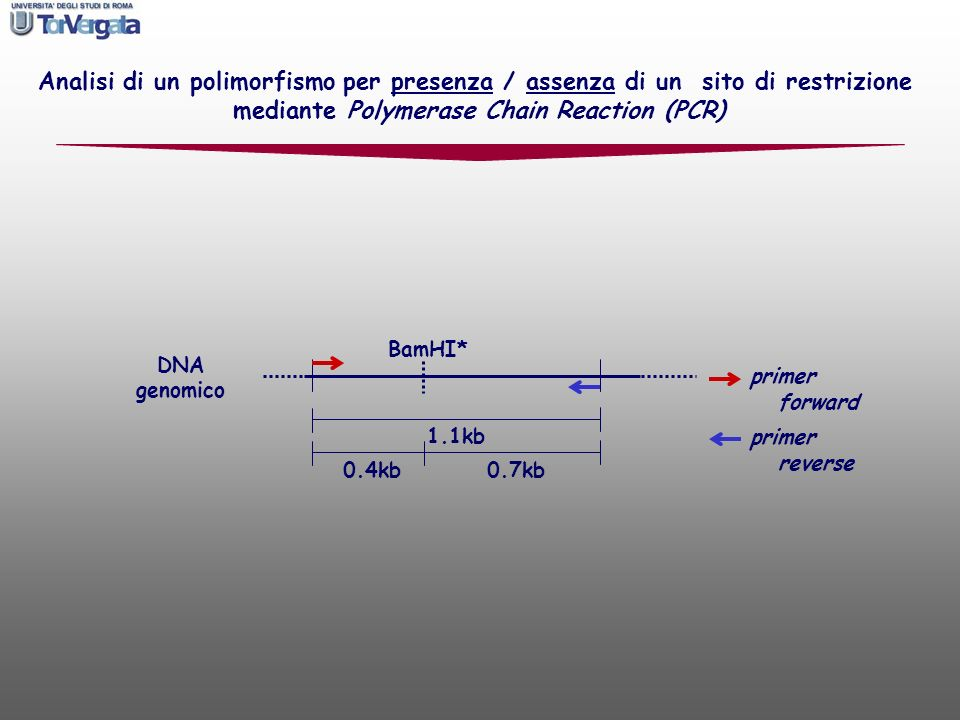 mediante Polymerase Chain Reaction (PCR)