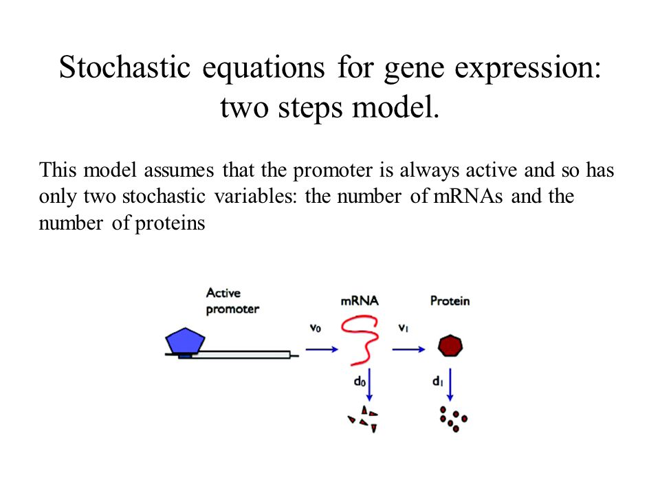 Stochastic equations for gene expression: two steps model.