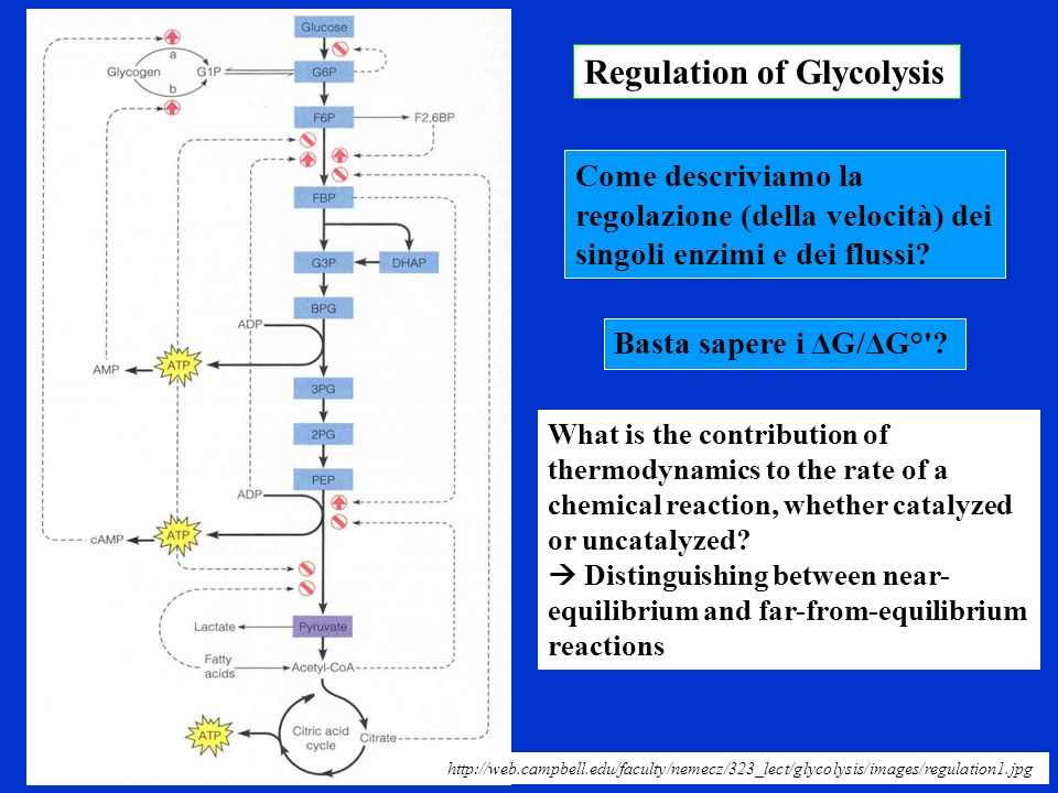 Regulation of Glycolysis