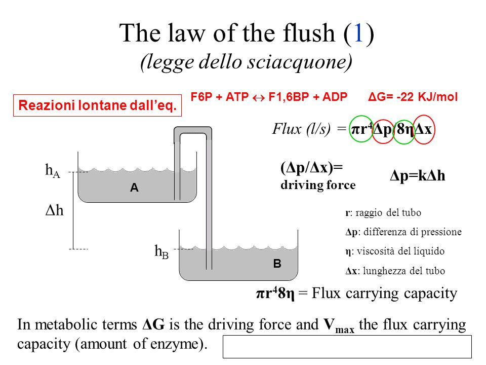 The law of the flush (1) (legge dello sciacquone)
