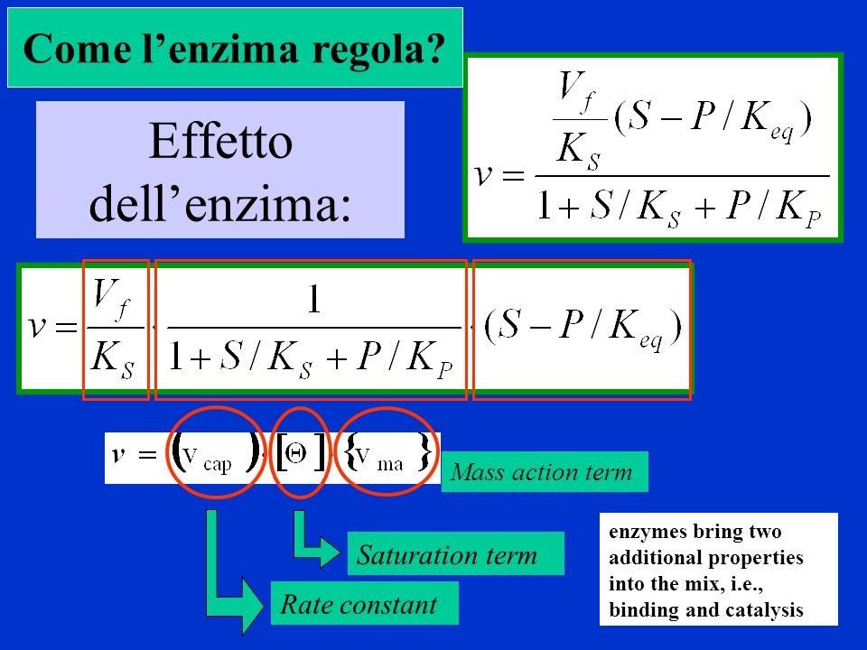 Effetto dell'enzima: Come l'enzima regola Saturation term