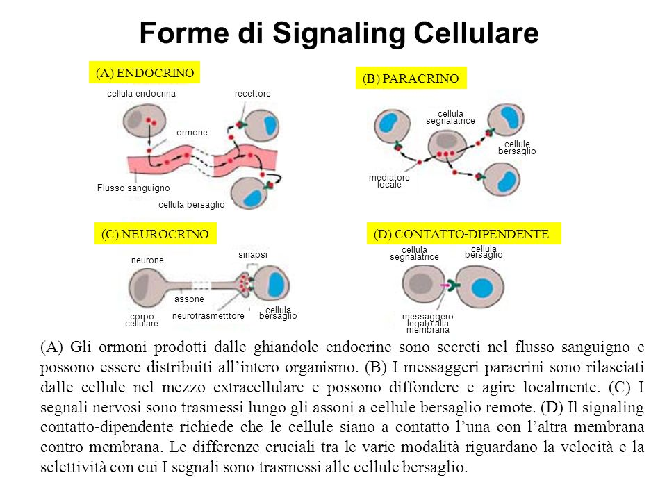Forme di Signaling Cellulare