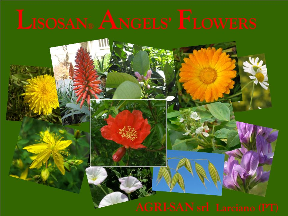 LISOSAN® ANGELS' FLOWERS