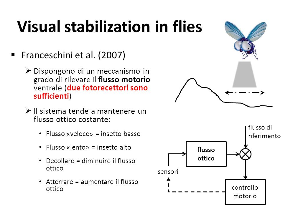 Visual stabilization in flies