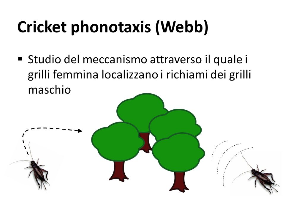 Cricket phonotaxis (Webb)