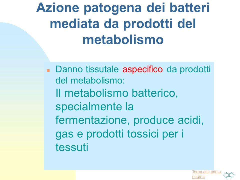 Meccanismi Di Patogenesi Batterica 3 Il Danno O La