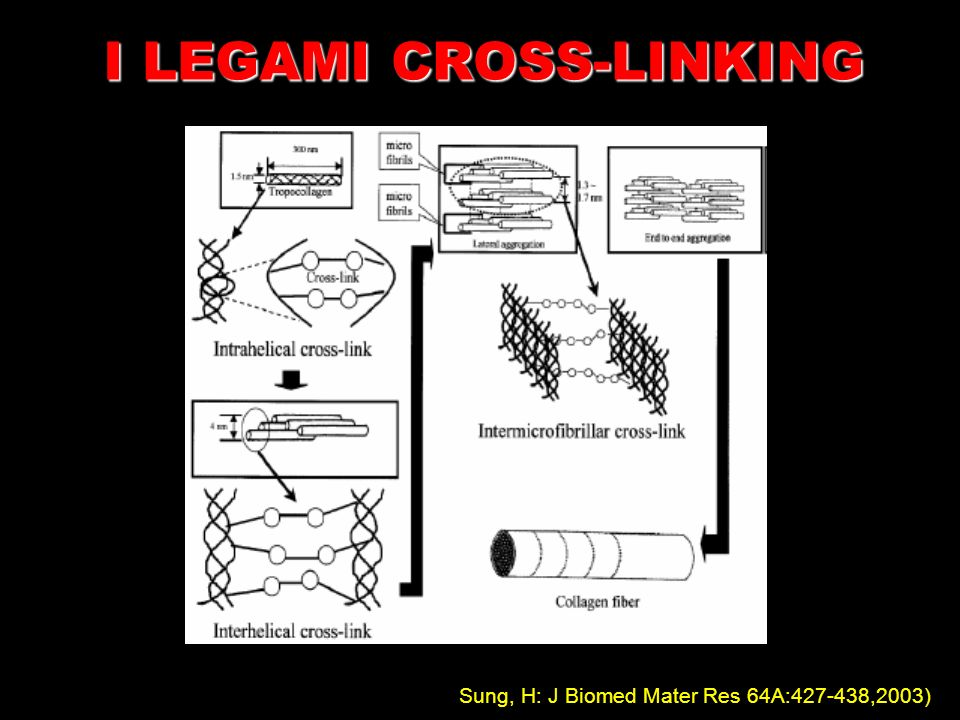 I LEGAMI CROSS-LINKING
