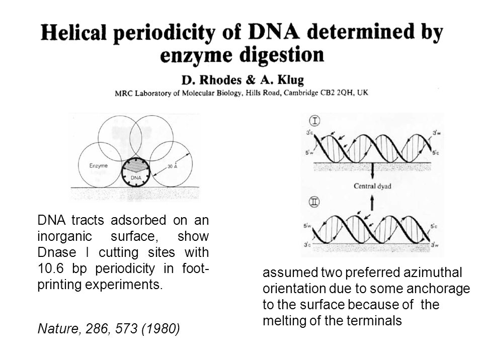 The existence of this effect might have been already inferred many years ago from the data that made it possible to Rhodes and Klug to determine the pitch of the DNA double helix.