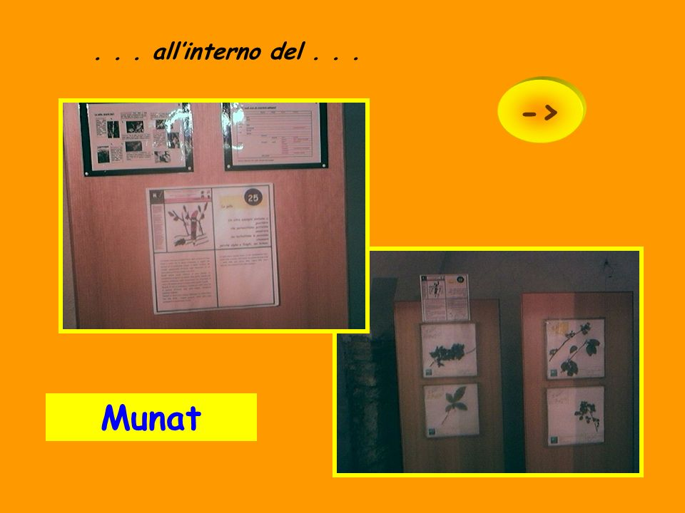 . . . all'interno del > Munat