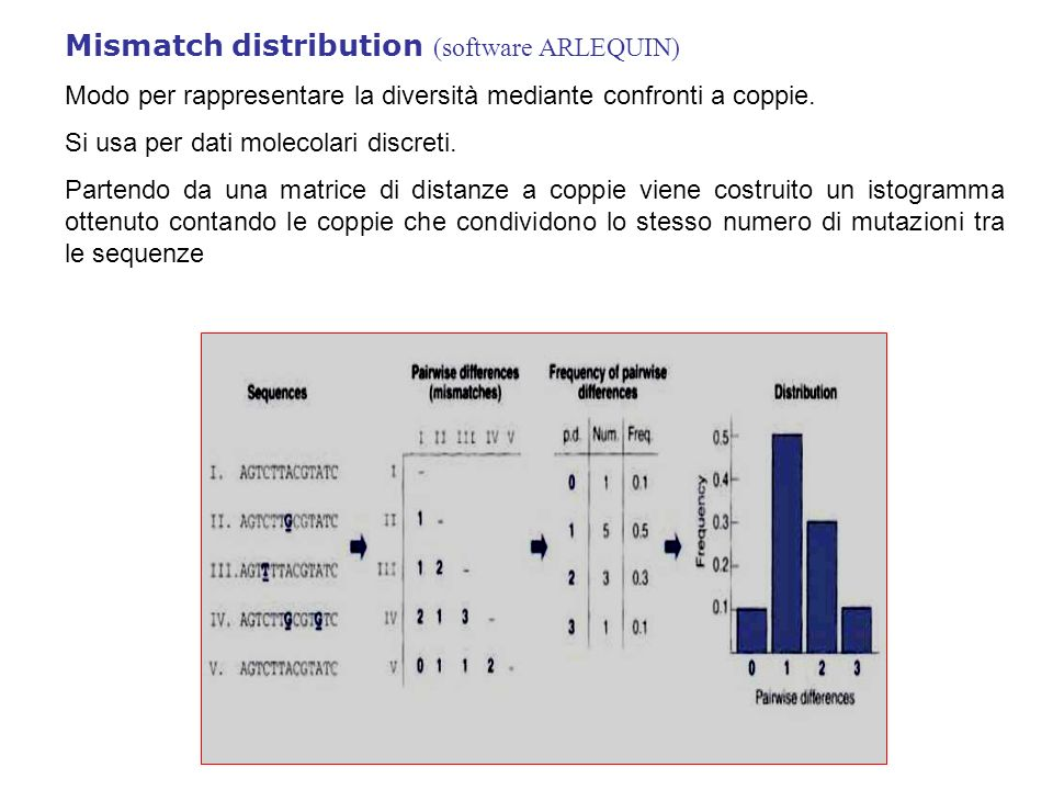 Mismatch distribution (software ARLEQUIN)