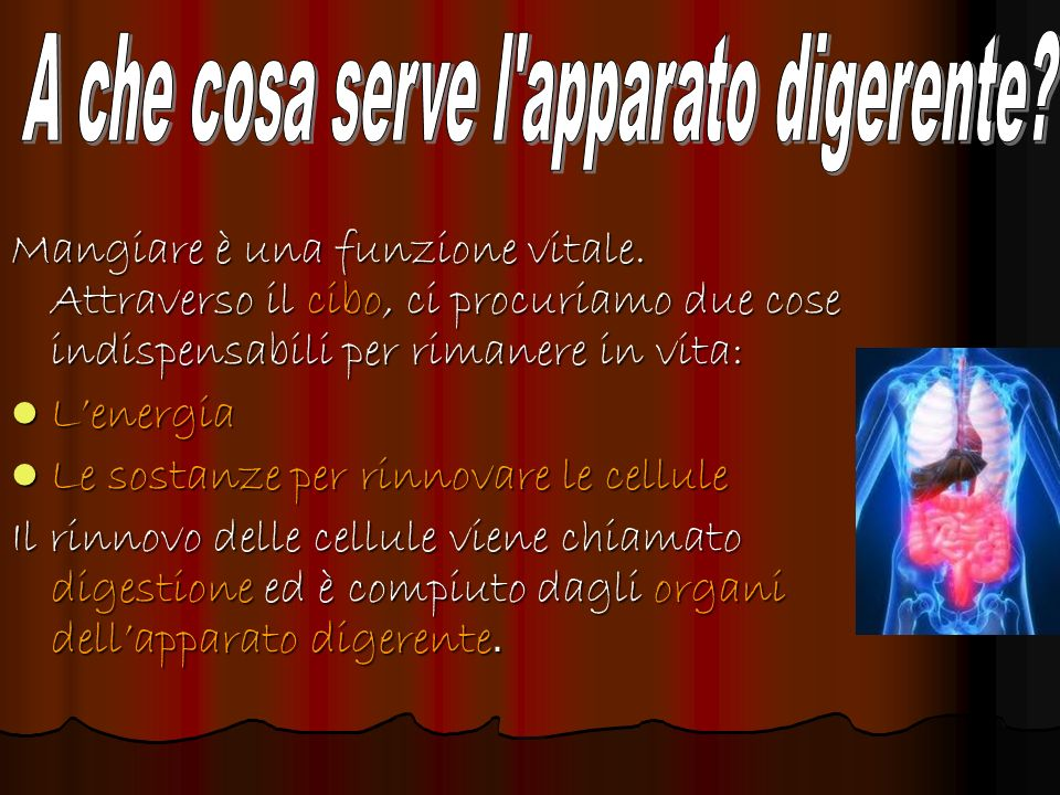 A che cosa serve l apparato digerente