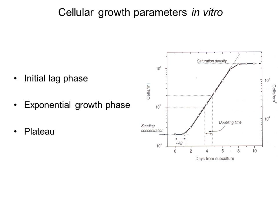 Cellular growth parameters in vitro