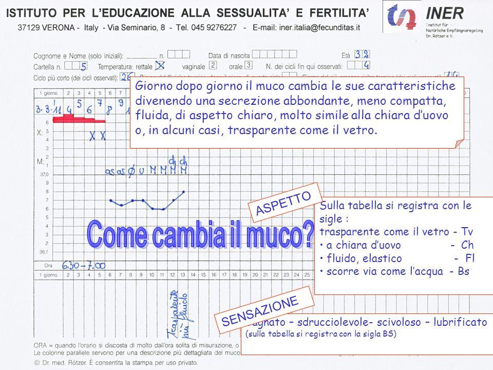 Il metodo Sintotermico del - ppt scaricare