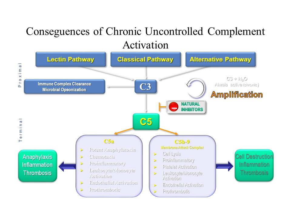 Conseguences of Chronic Uncontrolled Complement Activation