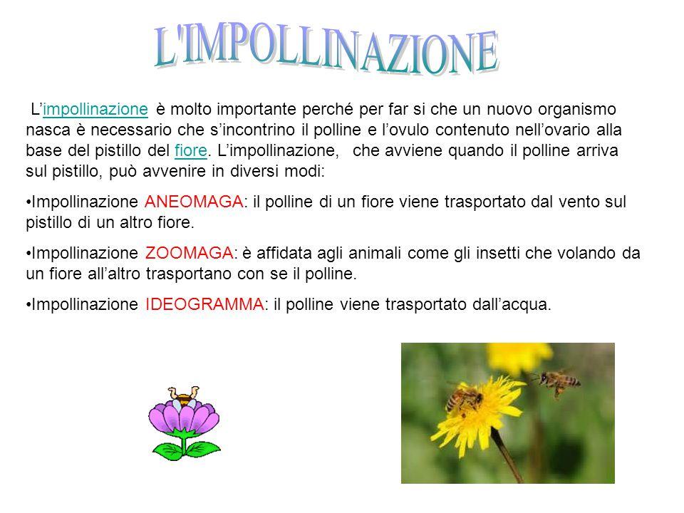 Attivita Al Parco Del Serio Ppt Video Online Scaricare