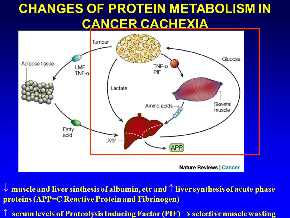 CHANGES OF PROTEIN METABOLISM IN CANCER CACHEXIA