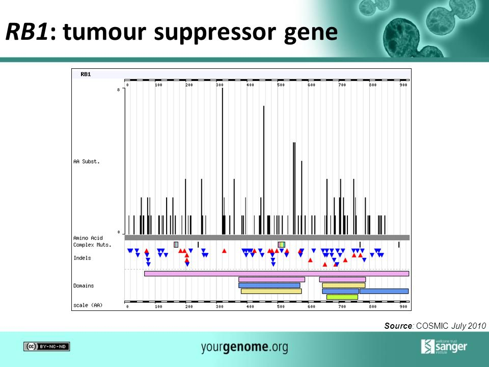 RB1: tumour suppressor gene