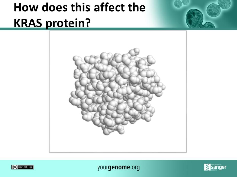 How does this affect the KRAS protein
