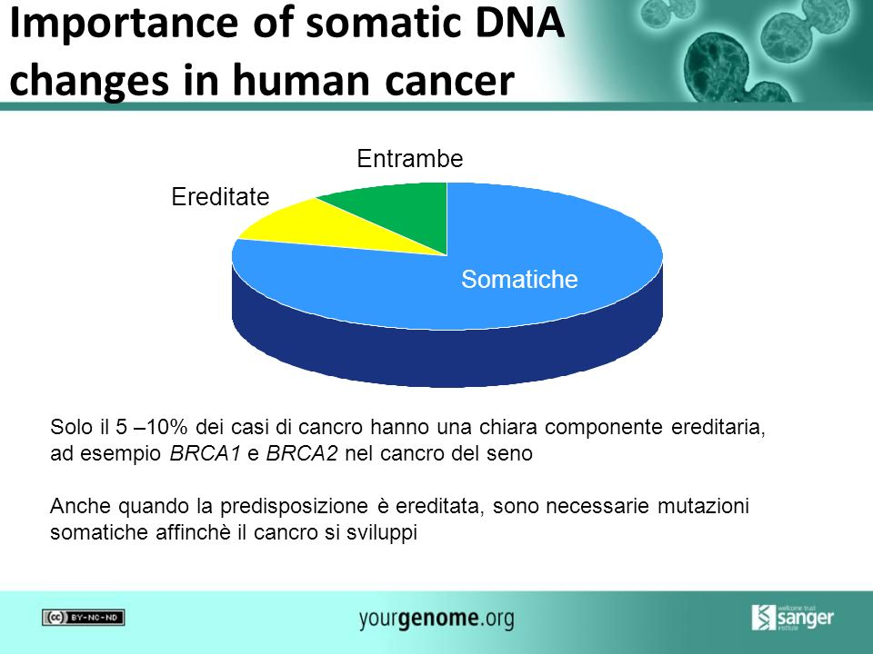 Importance of somatic DNA changes in human cancer