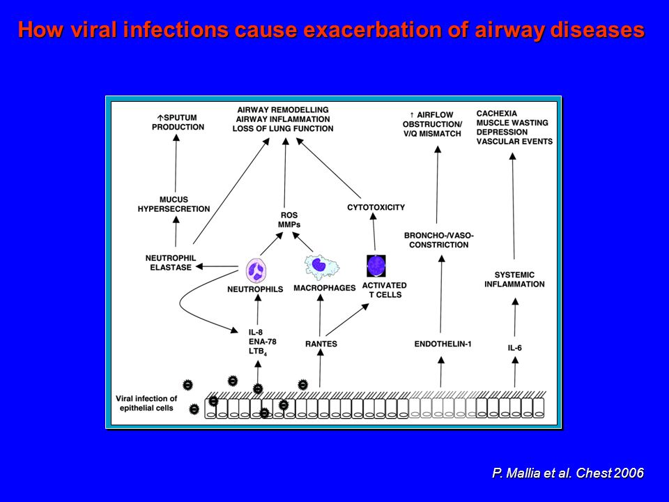 How viral infections cause exacerbation of airway diseases
