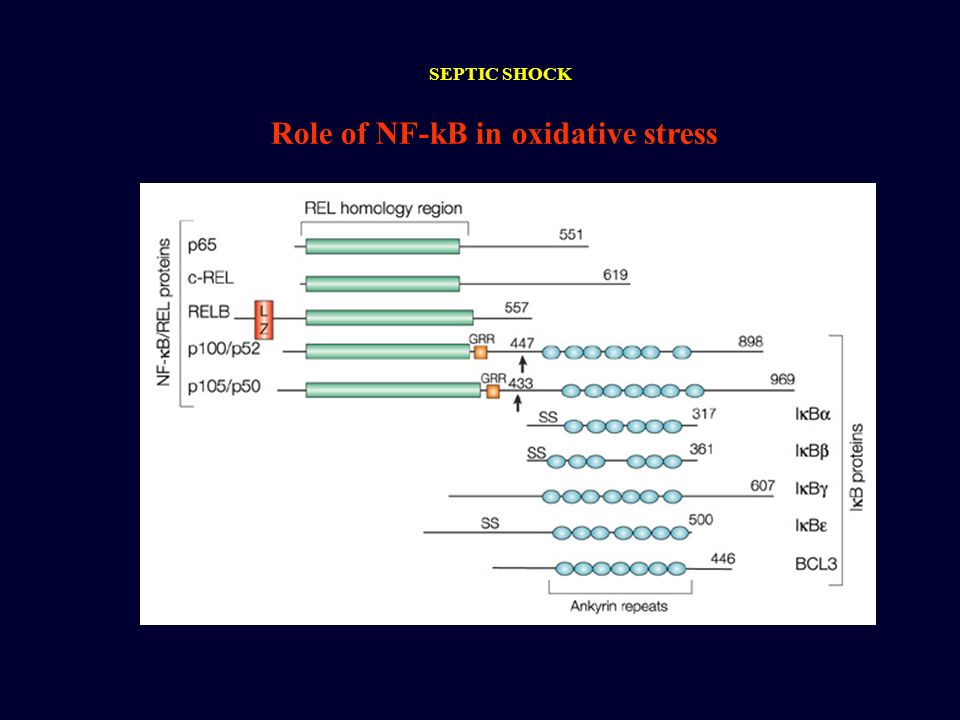 Role of NF-kB in oxidative stress