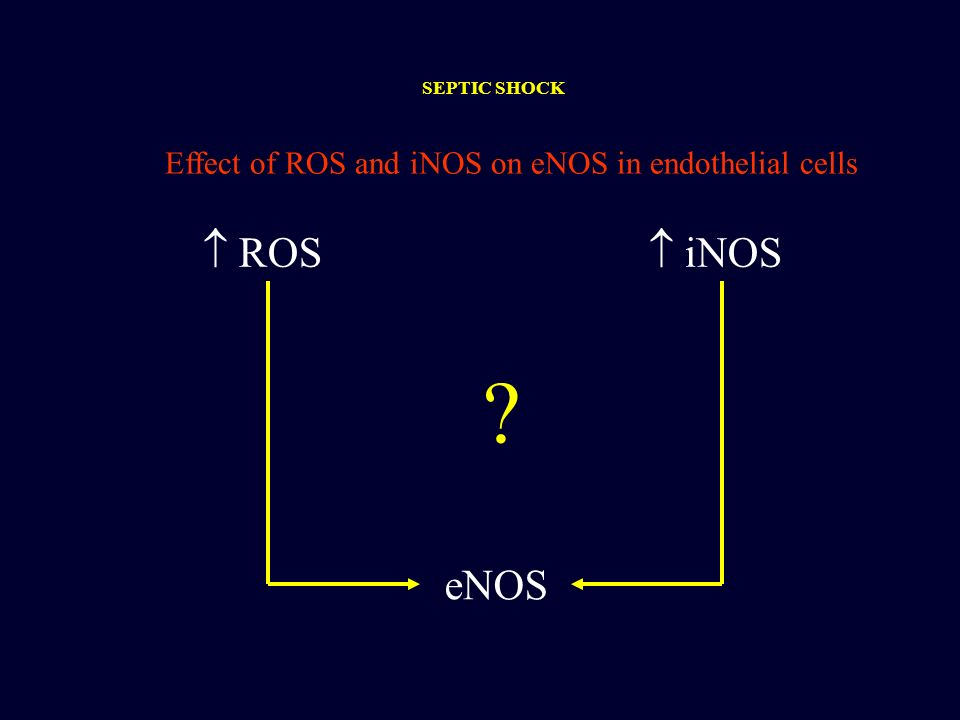 SEPTIC SHOCK Effect of ROS and iNOS on eNOS in endothelial cells  ROS  iNOS eNOS