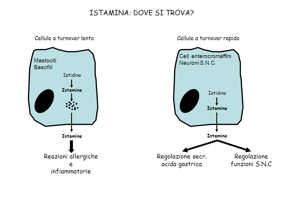 ISTAMINA: DOVE SI TROVA